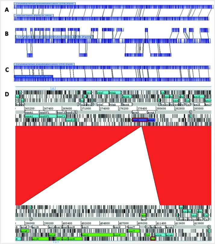 Transcriptome analysis of Corynebacterium pseudotuberculosis biovar