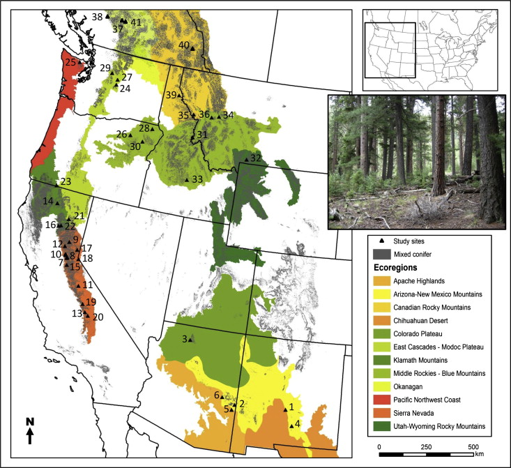 Effects of tree cutting and fire on understory vegetation in