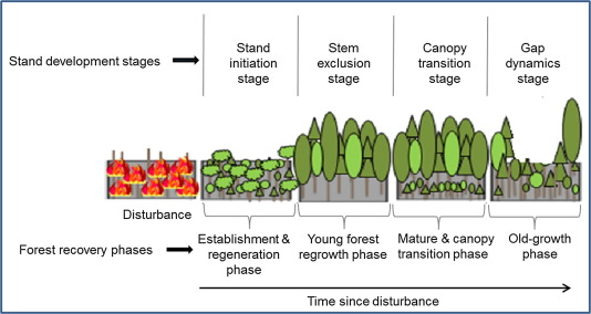 Levels of a mature forest