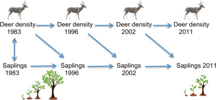impacts of white tailed deer on regional patterns of forest tree rh sciencedirect com white tailed deer skeleton diagram White-Tailed Deer Coloring Pages