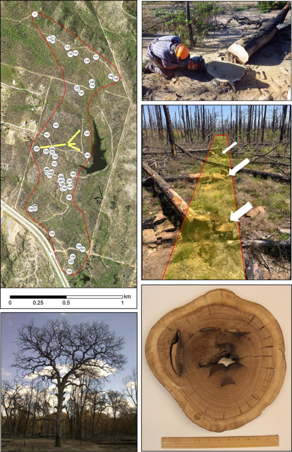 Three centuries of fire and forest vegetation transitions preceding