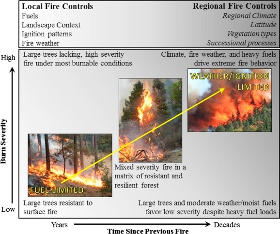 Regional and local controls on historical fire regimes of
