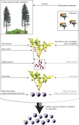 ... Download full-size image  sc 1 st  Science Direct & Additive positive effects of canopy openness on European bilberry ...