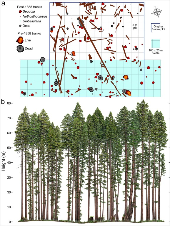 Allometric Equations For Sequoia Sempervirens In Forests Of