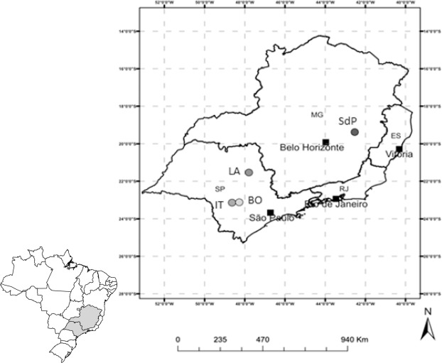 Nitrogen Cycling In Monospecific And Mixed Species Plantations Of