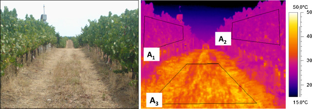 Modern viticulture in southern Europe: Vulnerabilities and