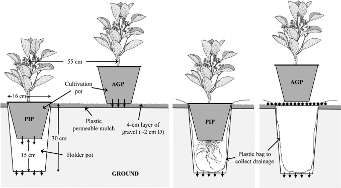 Effects Of Pot In Production System On Water Consumption