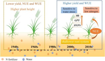 A Synergistic Increase In Water And Nitrogen Use Efficiencies In Winter Wheat Cultivars Released Between The 1940s And The 2010s For Cultivation In The Drylands Of The Shaanxi Province In China