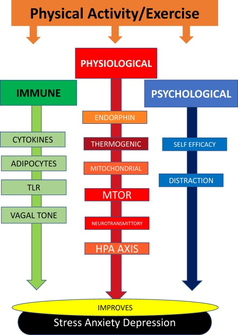 Exercise and mental health - ScienceDirect