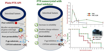 Oral delivery of paclitaxel nanocrystal (PNC) with a dual