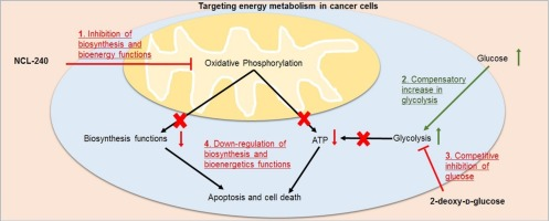 Targeting energy metabolism of cancer cells: Combined administration
