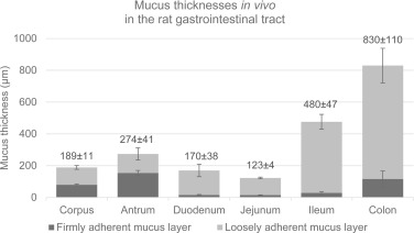 Physicochemical properties of mucus and their impact on transmucosal