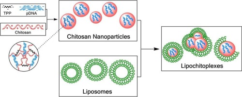 Lipid coated chitosan-DNA nanoparticles for enhanced gene