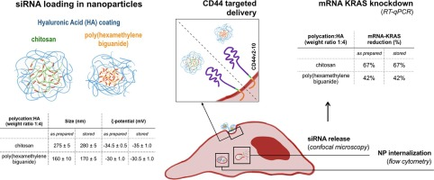 CD44 targeted delivery of siRNA by using HA-decorated