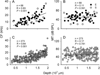 Visual input shapes the auditory frequency responses in the