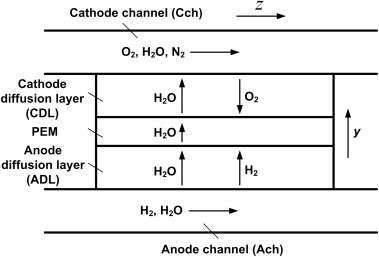 Two-dimensional modeling of a polymer electrolyte membrane fuel cell