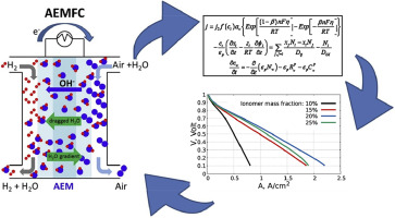 Steady state and transient simulation of anion exchange