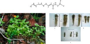 Heliopsis Longipes Pdf