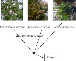 Ethnobotanical survey of medicinal plants used in the