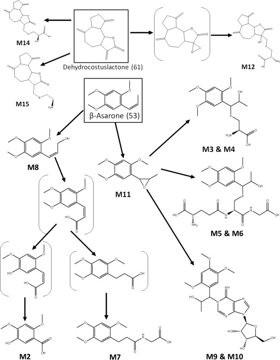 Identification And Analysis Of Absorbed Components And Their