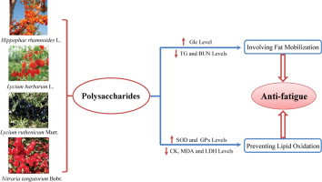 Anti-fatigue activity of polysaccharides from the fruits of four