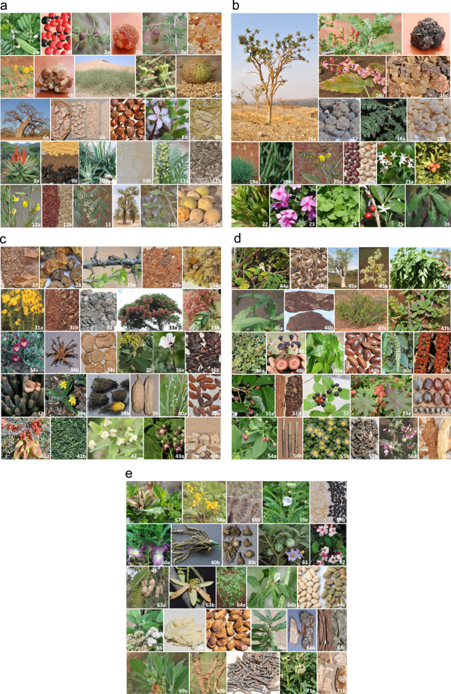 A review of commercially important African medicinal plants