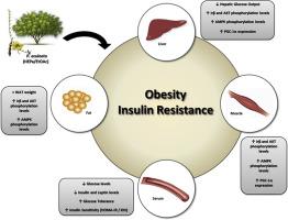 high fat diet insulin resistance