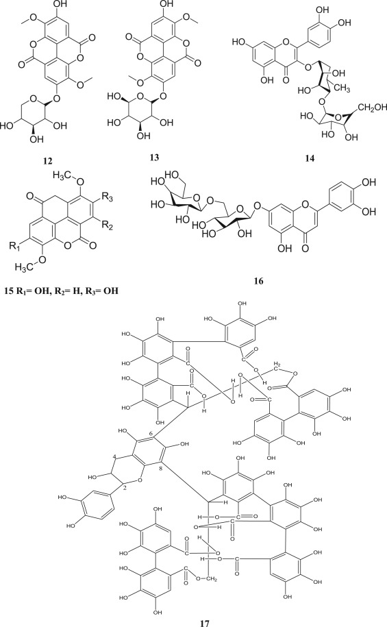 The Genus Anogeissus A Review On Ethnopharmacology Phytochemistry