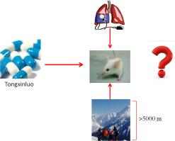 通心络对肺动脉高压和肺血管暴露在低压缺氧环境大鼠重塑的影响