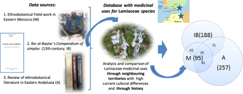 Comparison of Lamiaceae medicinal uses in eastern Morocco