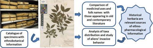 Medicinal plant uses and names from the herbarium of
