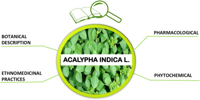 A Review Of Acalypha Indica L Euphorbiaceae As Traditional