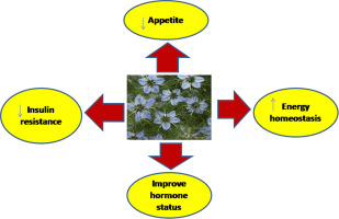 The effects of Nigella sativa L  on obesity: A systematic