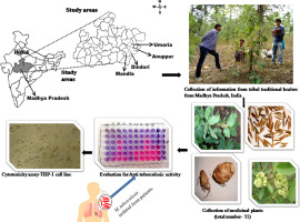 Anti-mycobacterial activity of some medicinal plants used