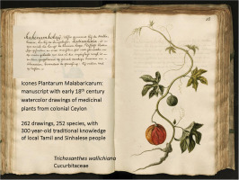 Icones Plantarum Malabaricarum: Early 18th century botanical