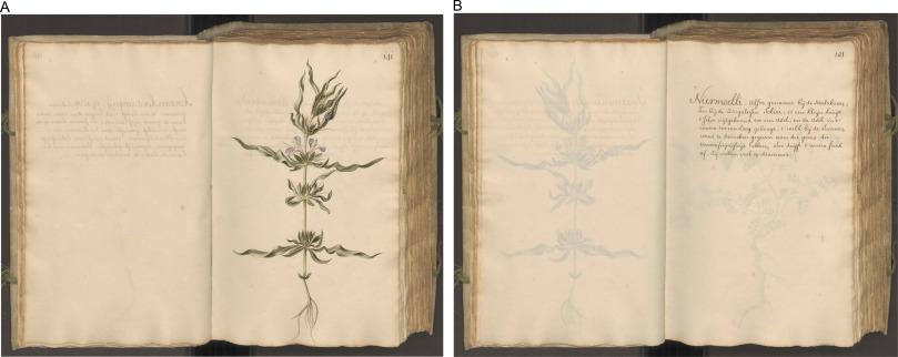 Icones Plantarum Malabaricarum: Early 18th century botanical