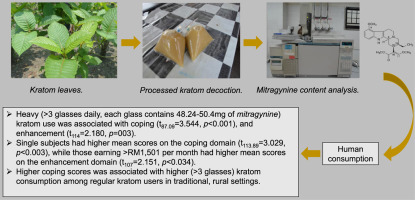 Motives For Using Kratom Mitragyna Speciosa Korth Among Regular Users In Malaysia Sciencedirect