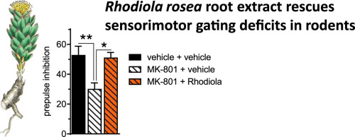 Rhodiola rosea root extract has antipsychotic-like effects in rodent
