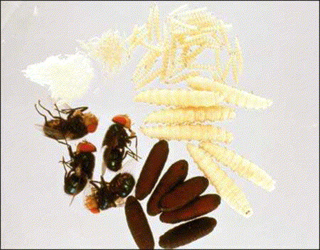 The History Of Forensic Entomology In German Speaking Countries Sciencedirect