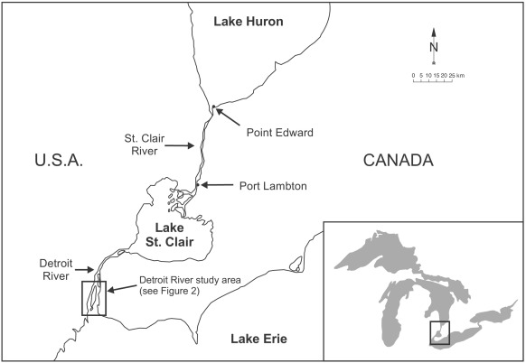 Nutrient concentrations and loadings in the St  Clair River