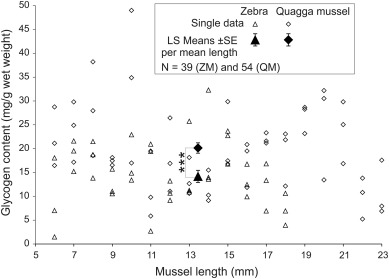 Biometry, shell resistance and attachment of zebra and quagga