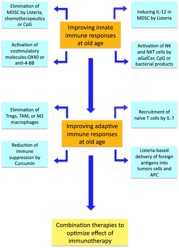 Is cancer vaccination feasible at older age? - ScienceDirect