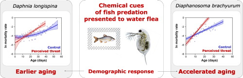 How Perceived Predation Risk Shapes Patterns Of Aging In Water Fleas