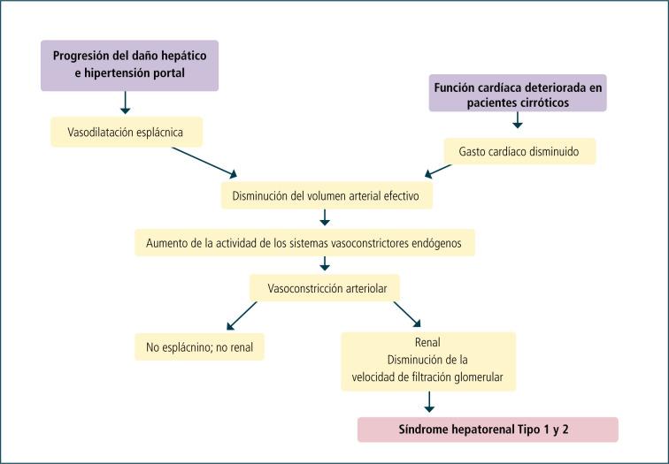 Expansión mesangial patogénesis de la hipertensión