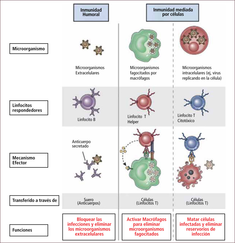 Visión panorámica del sistema inmune - ScienceDirect
