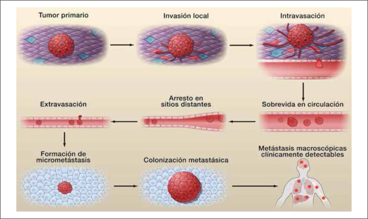 Conociendo y comprendiendo la célula cancerosa: Fisiopatología del ...