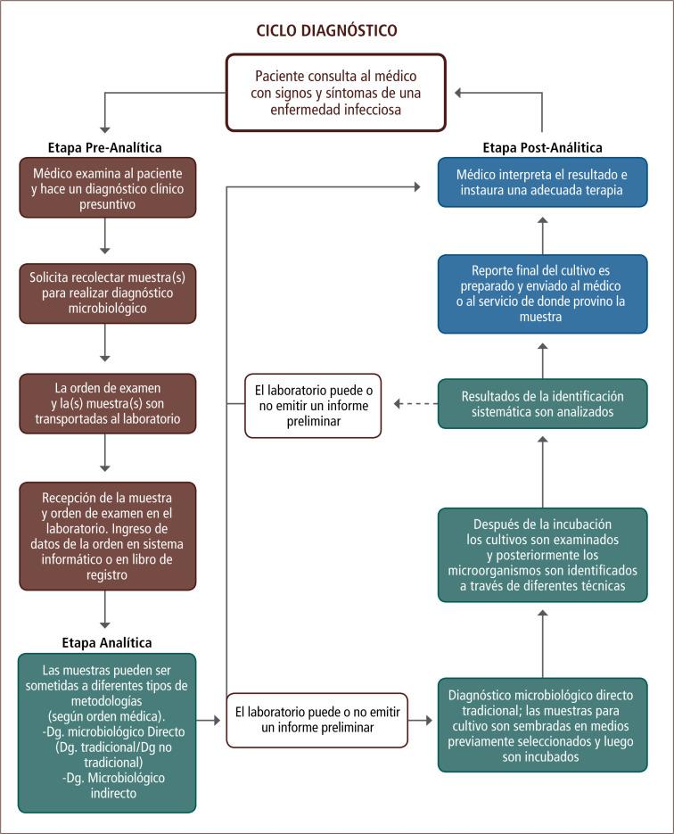 Laboratorio de microbiología: conocimientos básicos para un