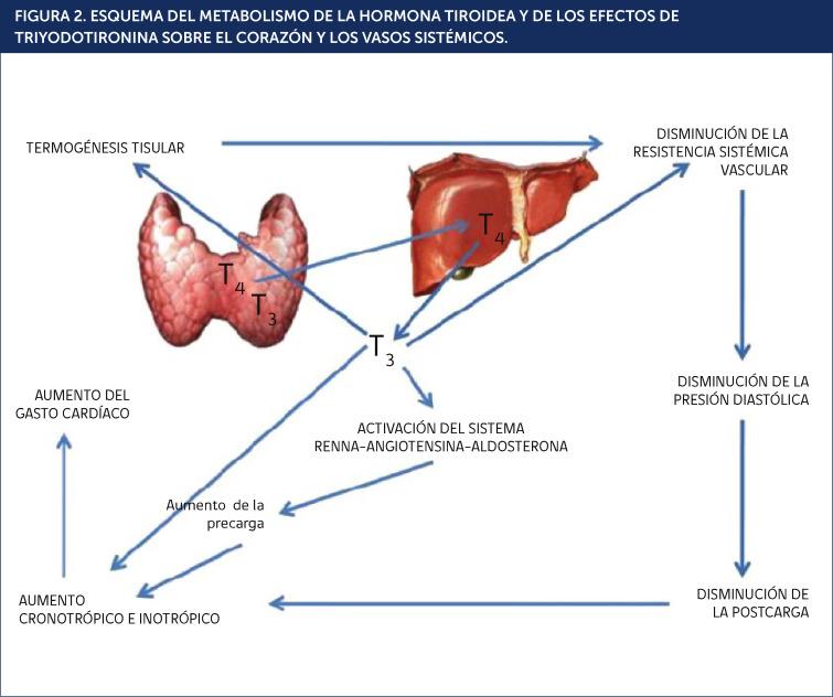 Hipertensión diastólica tiroides