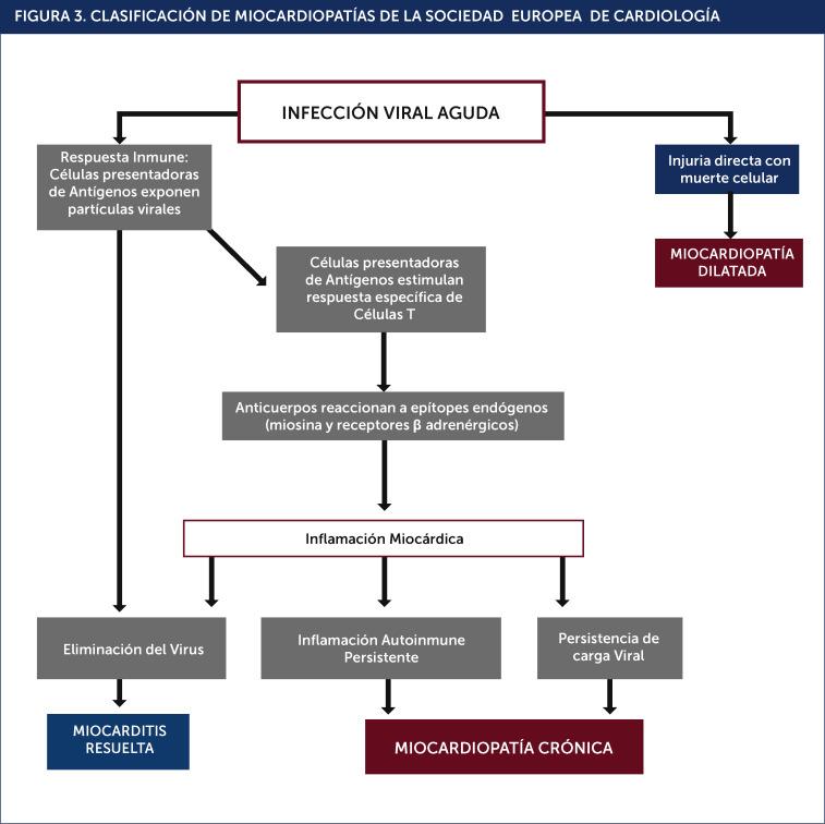 Fisiopatología de la cardiopatía hipertensiva pdf