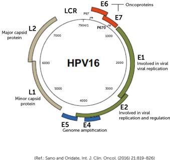 Que significa hpv positivo, Que significa hpv positivo